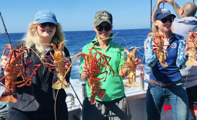 4 Hour Rock Lobster Tour